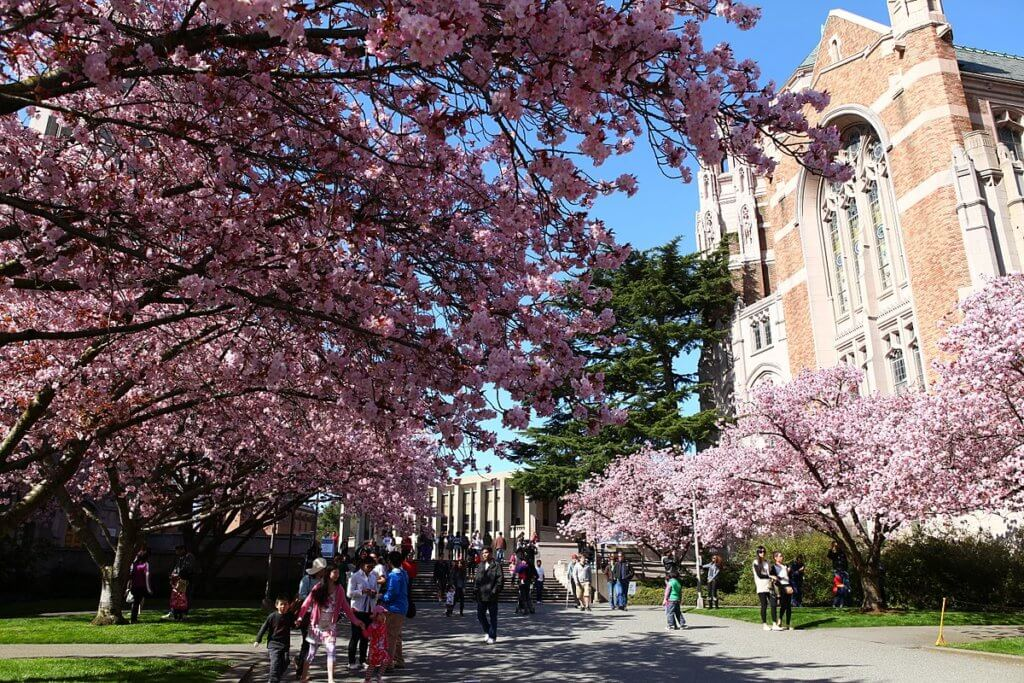 University of Seattle Sakura Picture Bold Patents Resources