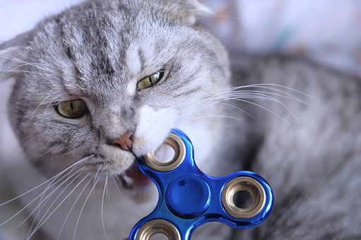 Even this cat loves fidget spinners