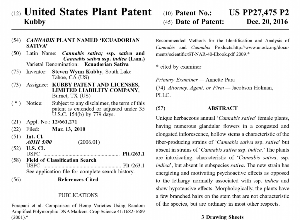 Cannabis Sativa plant named Ecuadorian Sativa