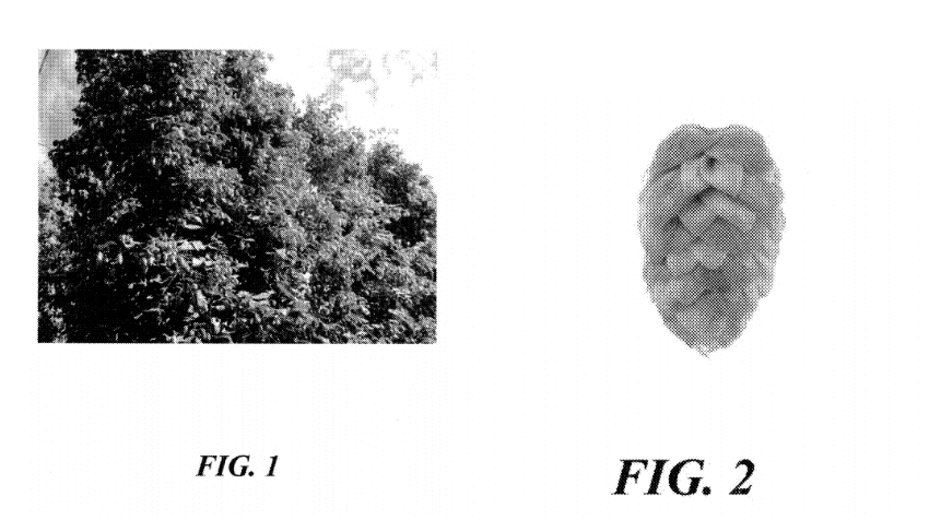 These are the images in a plant patent application